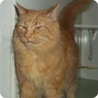 Adopt A Pet :: Clifford - Ashland, OH
