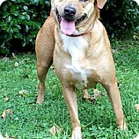 Adopt A Pet :: Roxy - nashville, TN