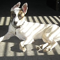 Terrier (Unknown Type, Medium) Mix Dog for adoption in Greenback, Tennessee - Chloe