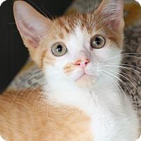Adopt A Pet :: Brendan  Male - knoxville, TN