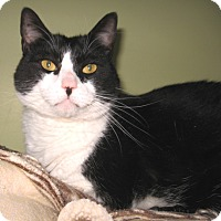 Adopt A Pet :: Ronnie -Adoption Pending! - Colmar, PA