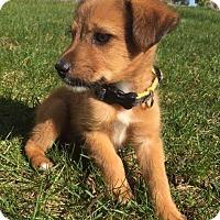 Adopt A Pet :: Dante - New Oxford, PA