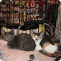 Adopt A Pet :: Cali - Riverside, RI