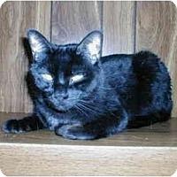 Adopt A Pet :: Nibbles - Toronto, ON