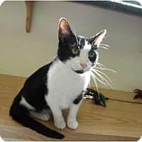 Adopt A Pet :: Liza - Milwaukee, WI
