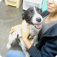 Adopt A Pet :: Ginger - Greencastle, NC