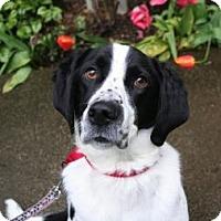 Adopt A Pet :: Patch - Seattle, WA