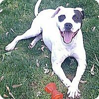 Adopt A Pet :: Rocket - Knoxville, TN
