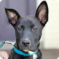 Adopt A Pet :: Natalie - Homewood, AL