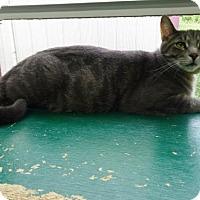 Adopt A Pet :: Mike - Belleville, MI