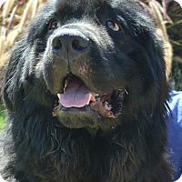 Adopt A Pet :: Austin - Bellflower, CA