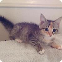 Adopt A Pet :: Tanya - Irvine, CA