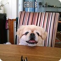Adopt A Pet :: Chole - SO CALIF, CA