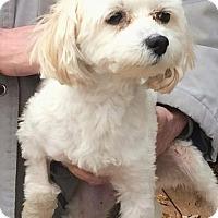 Adopt A Pet :: Champ - Homer Glen, IL