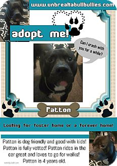 American Pit Bull Terrier Dog for adoption in Des Moines, Iowa - Patton-Adoption Pending