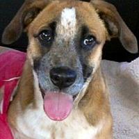 Adopt A Pet :: CARTER (video) - Los Angeles, CA