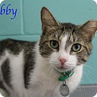 Adopt A Pet :: Bobby - Bradenton, FL