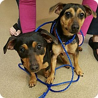 Adopt A Pet :: Amelia and Abagail - Winder, GA