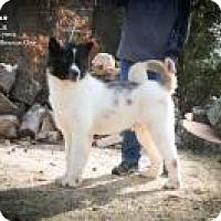 Adopt A Pet :: Zeus - Toms River, NJ