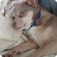 Adopt A Pet :: Tanker - Harrisburg, PA
