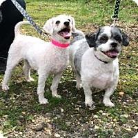 Adopt A Pet :: Jubilee - Voorhees, NJ
