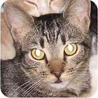 Adopt A Pet :: Morgan - Toluca Lake, CA
