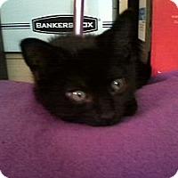 Adopt A Pet :: *Buddy - Winder, GA