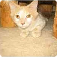 Adopt A Pet :: Calvin - Milwaukee, WI
