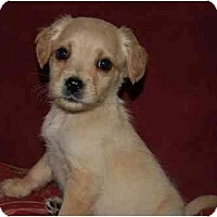 Adopt A Pet :: Winston - Chula Vista, CA