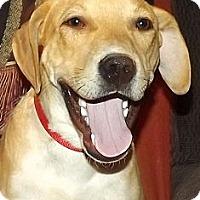 Adopt A Pet :: Copper - Phoenix, AZ