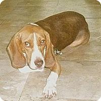 Adopt A Pet :: Watson - Palm Bay, FL