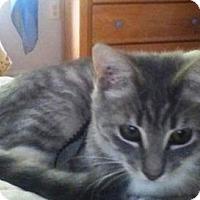 Adopt A Pet :: Tinkerbelle - Kirkwood, DE