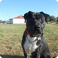 Adopt A Pet :: Socks - Staunton, VA
