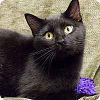 Adopt A Pet :: Philomena - Chicago, IL