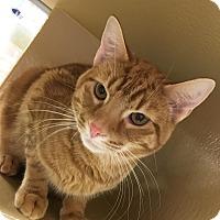 Adopt A Pet :: Baker - Covington, KY