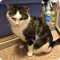 Adopt A Pet :: Cutie Pie - Colmar, PA