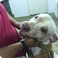 Adopt A Pet :: none given yet - Upper Sandusky, OH