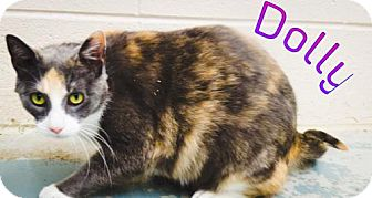 Calico Cat for adoption in Crown Point, Indiana - Dolly
