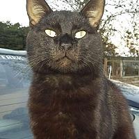 Adopt A Pet :: Tyson - Mosheim, TN