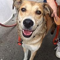 Adopt A Pet :: UFO - Brooklyn, NY