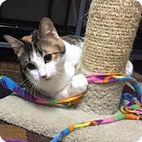 Adopt A Pet :: Beauty - Wichita, KS