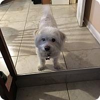 Adopt A Pet :: Casper - Beachwood, OH