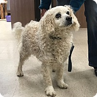 Adopt A Pet :: Spencer - Tracy, CA