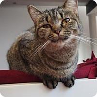 Adopt A Pet :: Darling - Denver, CO