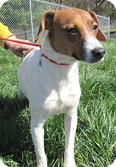 Beagle/Hound (Unknown Type) Mix Dog for adoption in Reeds Spring, Missouri - Princess