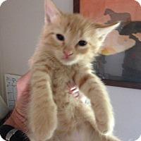 Adopt A Pet :: Juliet aka Spaghetti - Ravenna, TX