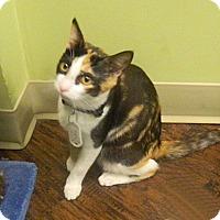 Adopt A Pet :: Kappa - The Colony, TX