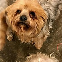 Adopt A Pet :: Susie - Bakersfield, CA