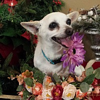 Adopt A Pet :: Baby girl - Davis, CA