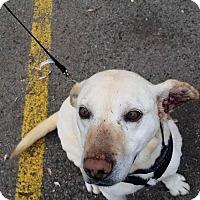 Adopt A Pet :: Klondike - Rathdrum, ID